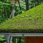 Hoe kan ik het mos op mijn dak verwijderen?
